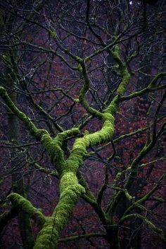 Here is the Moste Magical Tree ever twisting up spookily into the vivid purple woods in the Lake . Relax with these backyard landscaping ideas and landscape design. Foto Nature, All Nature, Amazing Nature, Nature Pics, Mother Earth, Mother Nature, Magical Tree, Foto Art, Tree Forest