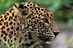 Misschien wel het mooiste uit Sri Lanka | Dieren | Zoom.nl