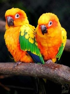 Sun Conures. they also come in red factor, but i like the yellow. some people call them mini macaws, but they aren't. still very playful and loving, the live 30-years maybe longer if well cared for. they are LOUD if needs are not being met or if not given proper boundaries (NEVER HIT OR SCREAM AT A BIRD!!!!!!!)