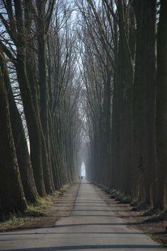 """BOMENRIJK by Joost van Meeteren (Juni: """"Natuur"""")"""