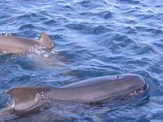 Se desmonta la teoría del parentesco en relación al varamiento masivo de ballenas | BolsaSpain