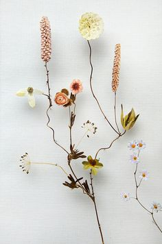 Flower Constructions by Anne Ten Donkelaar