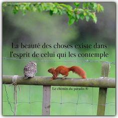 La beauté... Plus Belle Citation, Quote Citation, French Quotes, Good Vibes Only, Something Beautiful, New Words, Positive Attitude, Positive Affirmations, Positivity