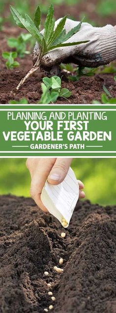 If you�re new to the world of vegetable gardening, you�re in for a treat! Fresh veggies have a flavor that can�t be beat, and they�re healthy and nutritious. Plus, growing your own is friendly on the budget, and gardening is an excellent way to reduce str