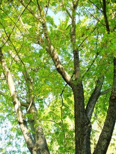 SPRING TREES QMB Free Images and Clipart Site | QMB Quality Music and Books Free Images Site