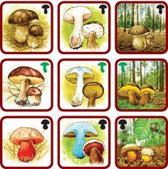 Montessori Materials, Science, Reggio Emilia, Matching Games, Autism, Teacher, Babies, Arrows, Environment