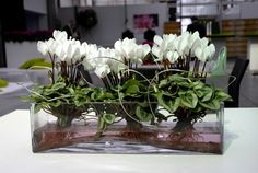 Cyclamen Super Serie on water, so cool and creative!