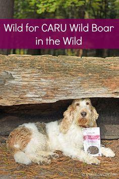 My GBGV Life | I'm loving the all natural Wild Boar dog treats from @caru: