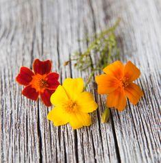 Syötäviä kukkia: Samettikukka, ruusu jne...