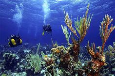scuba diving in australia...awesome!
