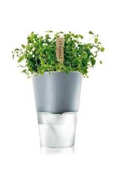 Self-Watering Herb Pot: I'm really into anything that can take care of itself.