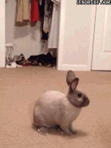 Conejos (gif)