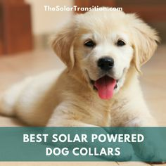 8 of the best solar powered dog collars - The Solar Transition