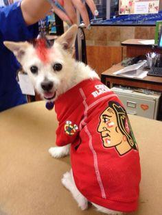 Twitter fan @SillyJilly530 's pup represents the Hawks. #HockeyPets