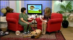 Tampa Veterinarian, Dr. Melissa Webster, shares tips to clean your dog's...