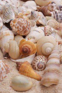 Shells - by Byron Jorjorian