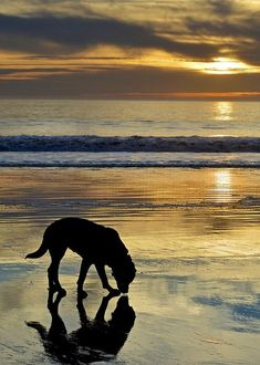 dog, beach, sunset