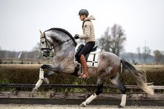 Order Dressage Saddle Pad Matt Harnacke from Equestrian Stockholm ✓ Worldwide Shipping ✓ Fast Delivery ☆ Unique Selection of Riding Wear & Accessories. Dressage Saddle, Dressage Horses, Dressage Videos, Draft Horses, Equestrian Outfits, Equestrian Style, Equestrian Problems, English Riding, Saddle Pads