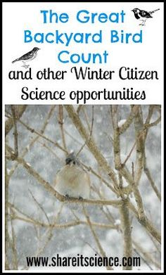 Share it! Science News : The Great Backyard Bird Count and other Winter Citizen … Share it! Science News : The Great Backyard Bird Count and other Winter Citizen Science Activities Steam Activities, Craft Activities For Kids, Winter Activities, Science For Kids, Science Activities, Science Projects, Science And Nature, Science News, Science Writing