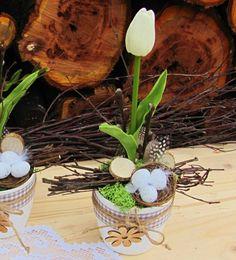 Přírodní dekorace s tulipánem Plants, Plant, Planets
