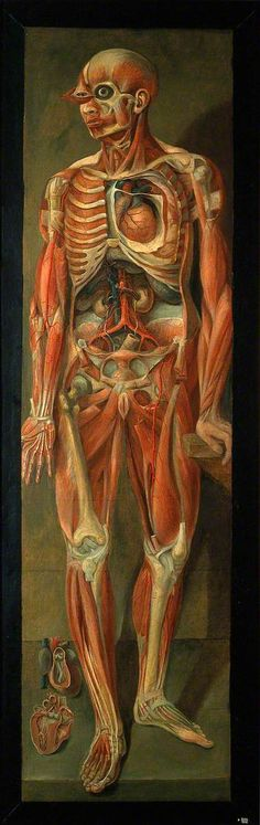 A Standing Dissected Man Looking to Left, with Two Separate Figures of the Heart Jacques-Fabien Gautier D'Agoty (1710–1781) Wellcome Library