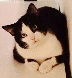 Georgie Cat | Pawshake