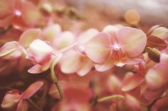 just add ice  Orchid | Orchid Fertilizing | Orchid Photos