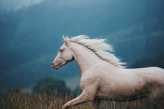 Melancholy Hill – Equine by Wengdahl All The Pretty Horses, Beautiful Horses, Animals Beautiful, Cute Horses, Horse Love, Equine Photography, Wildlife Photography, Photography Flowers, Zebras