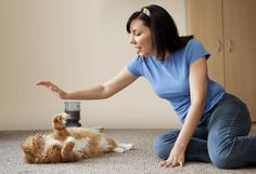 Cat dander threatens those who suffer from allergies. Learn the details on cat dander, the mystery of Fel D1, and how and why it affects allergy victims.