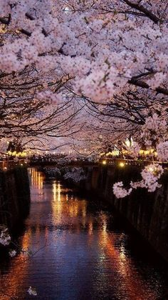 Cerejeiras à noite.