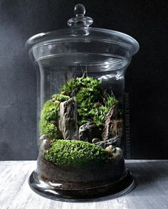 Mini landscape scene housed within a glass apothecary jar using live moss and petrified wood pieces. I like using petrified wood because I think it realistically simulates the look of mountains/cliffs. ⛰ #terrarium #miniaturegarden #bonsaigarden #terrariums #moss #petrifiedwood #diorama  #garden #fairygarden