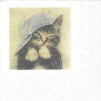 1 Lunch Serviette - Napkin Motiv 2x auf der Serv. (DB15) Katze mit Jeansmütze