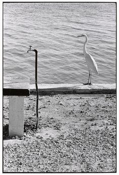 Magnum Photos -Elliott Erwitt