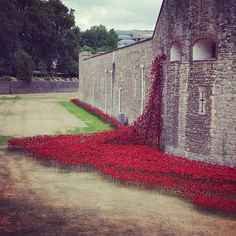 Ceramic poppies unveiled at Tower of London.  A major new installation marks the 100 year anniversary of the First World War