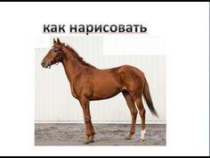 Как нарисовать лошадь 1 #draw How to draw a horse #draw