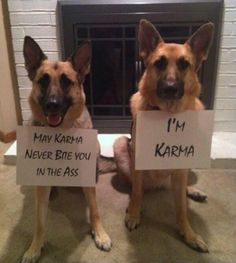 Funny pictures about May karma never bite you. Oh, and cool pics about May karma never bite you. Also, May karma never bite you. Cute Funny Animals, Funny Animal Pictures, Funny Dogs, Funny Photos, Animal Pics, Dog Pictures, I Love Dogs, Puppy Love, Cute Dogs