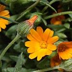 Marigold tea – indications of treatment Health And Beauty Tips, Beauty Hacks, Remedies, Bloom, Healthy, Desserts, Travel, Green, Viajes