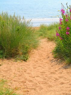 One of many little paths down to the beach @ St Cyrus - Summer 2006.