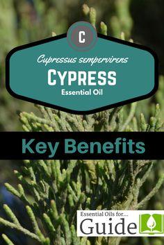 Cypress essential oi