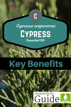 Cypress essential oi