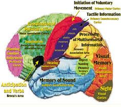 right side of brain - Google Search