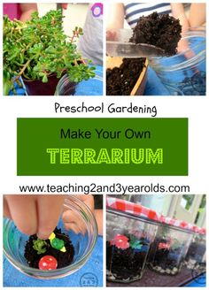 Making a terrarium with kids is a great preschool gardening activity! These are easy to make and take care of! From Teaching 2 and 3 Year Olds