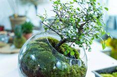 petiteplanet: Me encanta el vidrio materia seca y ndash;  mi otra vida