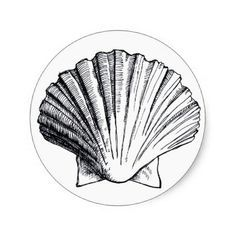 seashell and fish sketches - Google Search
