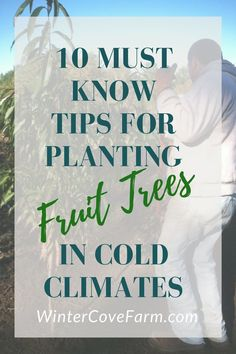With these 10 Must Know Tips to Planting Fruit Trees in Cold Climates, you have the basic knowledge to put your trees in the ground, this spring!