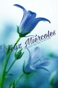 Feliz Miércoles Morning Quotes, Good Morning, Plants, Boss Lady, Rey, Yuri, Wednesday, Gifs, Disney