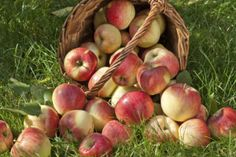 best apple picking near DC