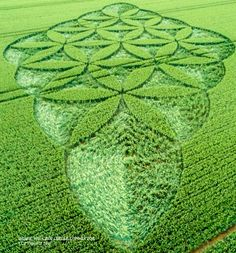 Crop Circle at Blackwood, nr Popham, Hampshire. Reported 28th June 2016