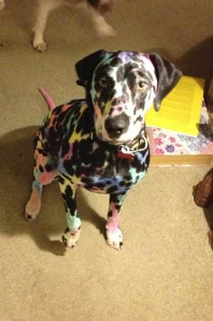 Kids, sharpies, and a Dalmatian makes for interesting times...looks like a Lisa frank puppy!