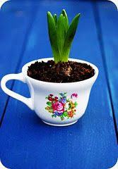 forced bulb in teacup